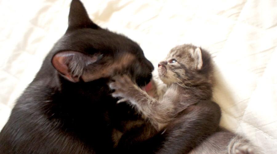 母子見つめ合う