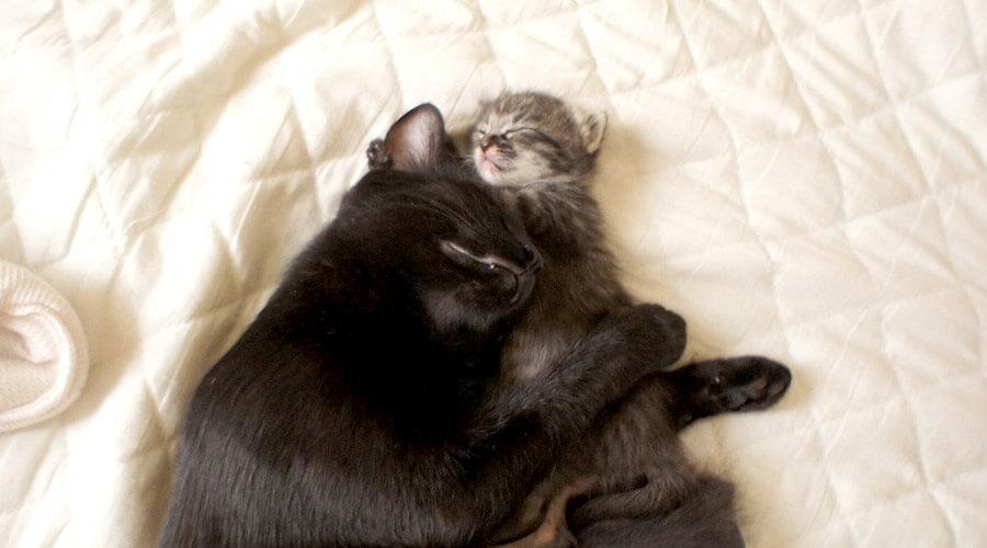 猫、幸せ〜