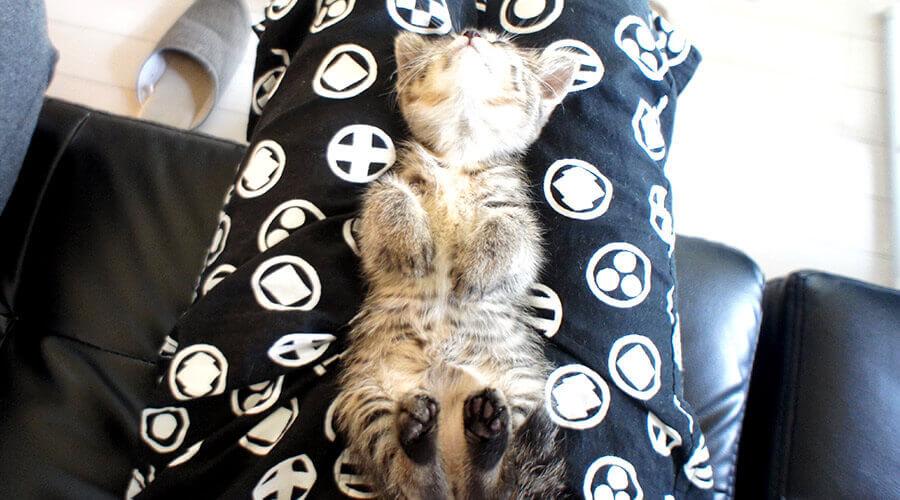 子猫がヒザで寝る