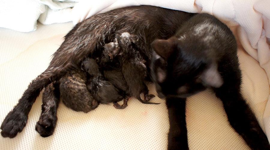 4匹生まれた