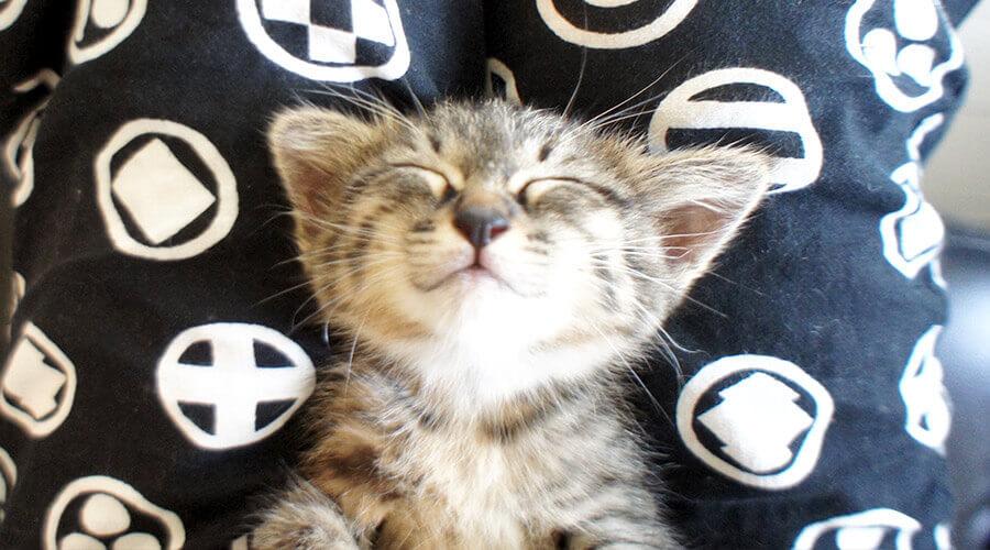 子猫の寝顔