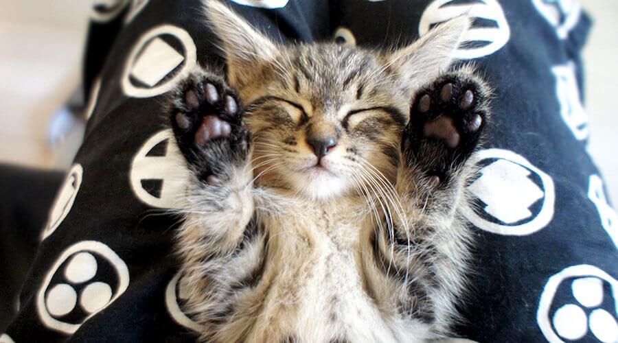 子猫が起きる
