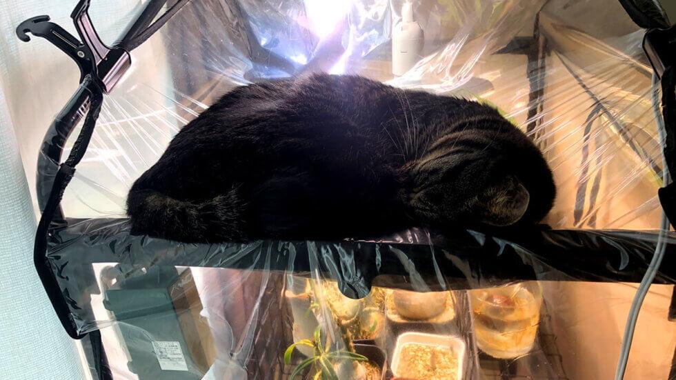 温室の上で寝る猫
