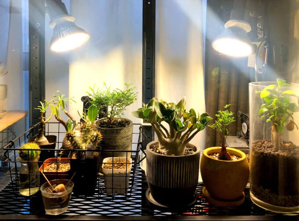 IKEAのファブリコールを温室に!